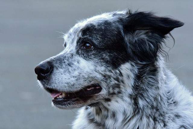 Why Do Dogs Stare at Walls? - Why Do Dogs