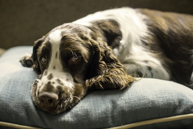 Ask the Vet: Why Do Dogs Vomit Undigested Food?