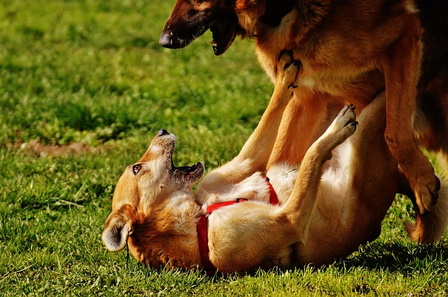 Why Does My Dog Attack Fearful Dogs?