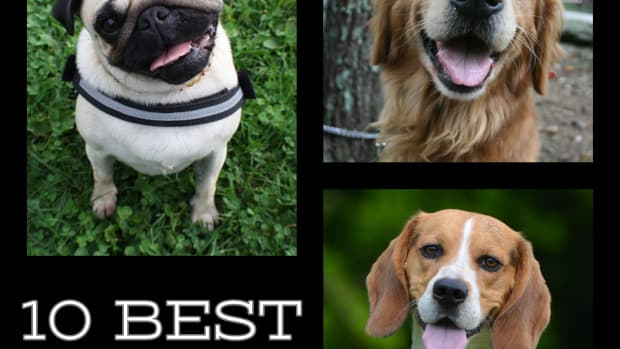 10-best-dogs-for-children