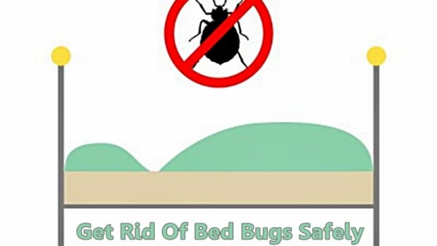 how-do-you-kill-bed-bugs-without-chemicals-use-a-steamer
