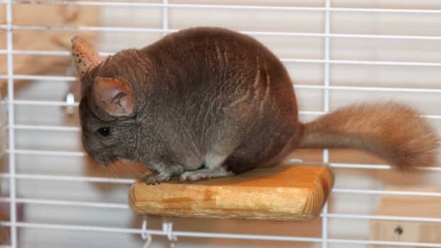 how-to-make-your-own-chinchilla-ledge-wooden-ledges