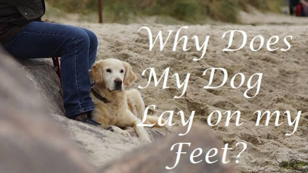 why-does-my-dog-lay-by-my-feet