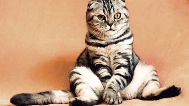 50-cat-idioms-and-phrases