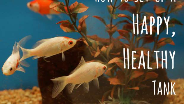 setting-up-a-fresh-water-aquarium