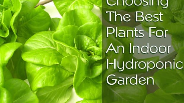 indoor-hydroponic-garden