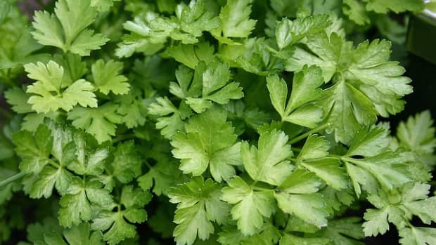 parsley-sage-rosemary-and-thyme