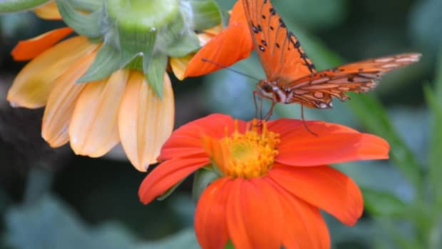 garden-sustainability