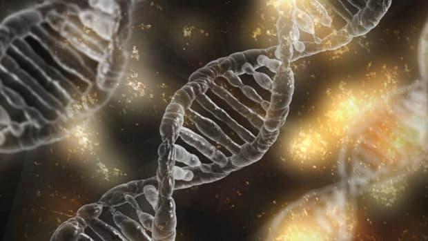 端粒酶 - 端粒 - 癌症和老化