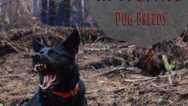 dog-behavior-101-most-dangerous-dogs-and-understanding-dog-behavior