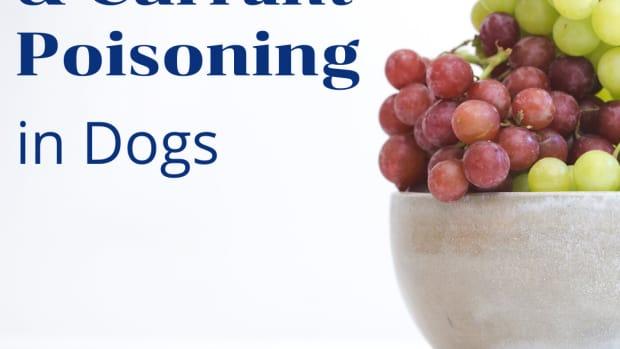 puppies-and-raisins-and-grapes