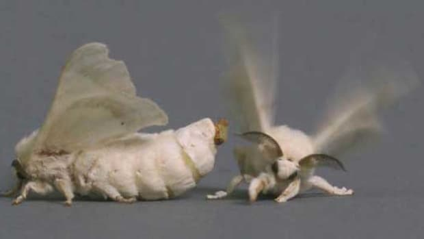 survival-instincts-of-insects