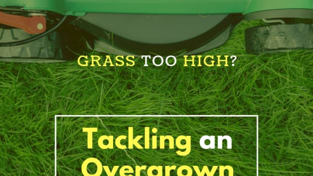 lawn-too-high
