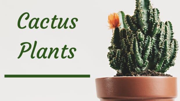types-of-indoor-cactus-plants