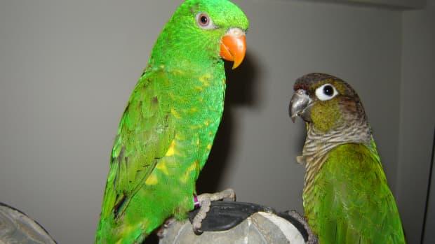 Artie and Rosie