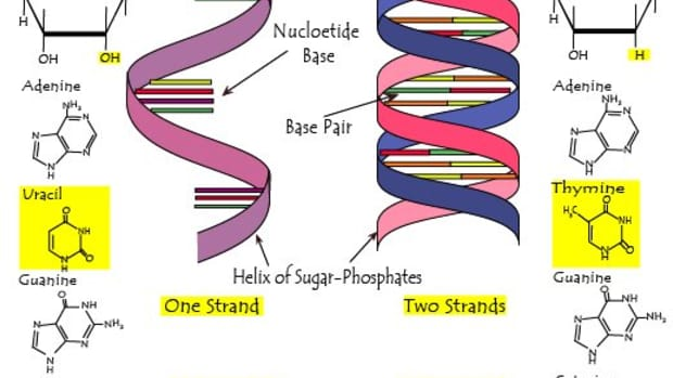 difference-between-dna-rna