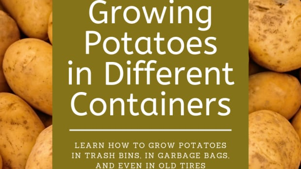 growing-potatoes-how-to-grow-potatoes-in-containers