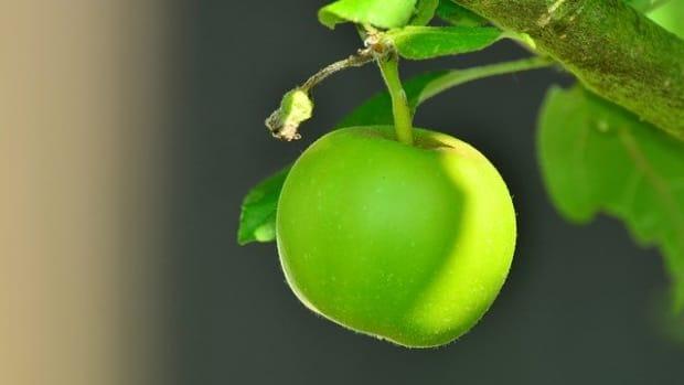 apple-as-vivid-symbols-a-short-poem