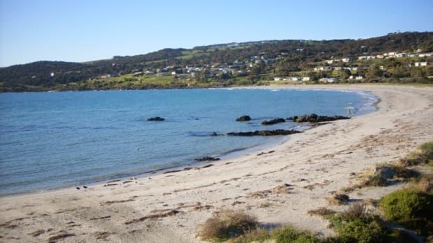 australian-animals-kangaroo-island-sa