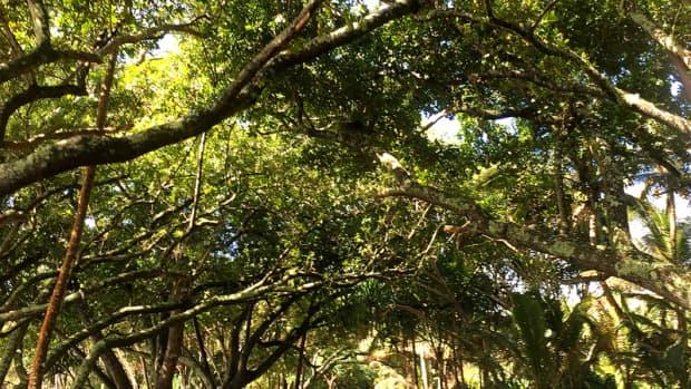hidden-hawaii-wild-and-scenic-puna-coast-on-the-big-island