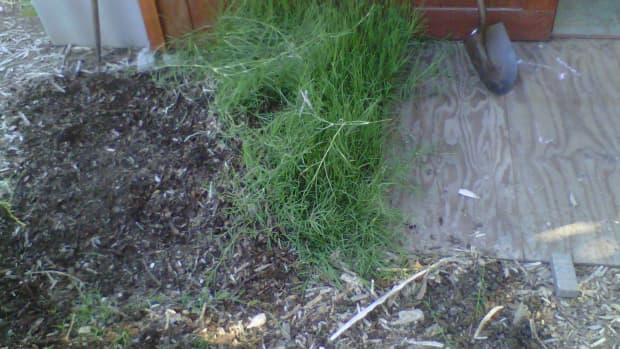 removing-bermuda-grass-organically