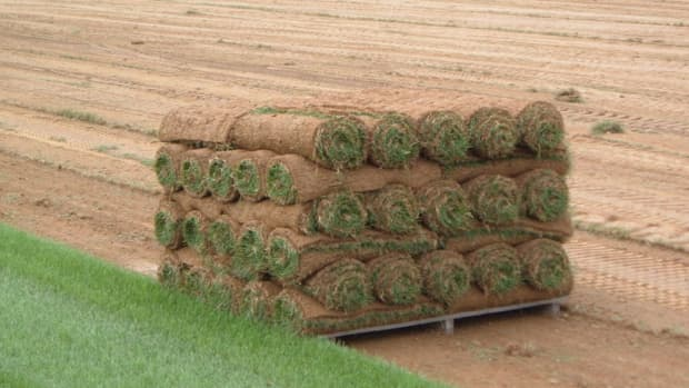 almost-everything-you-ever-wanted-to-know-about-laying-sod