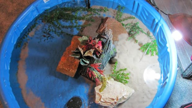 creating-an-indoor-pool-for-your-turtle