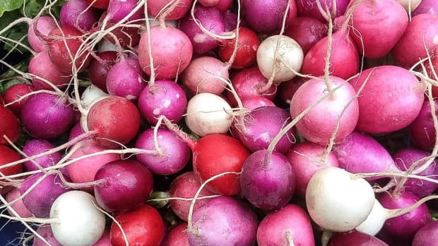 radishes-and-radish-plants-facts-nutrition-and-health-benefits