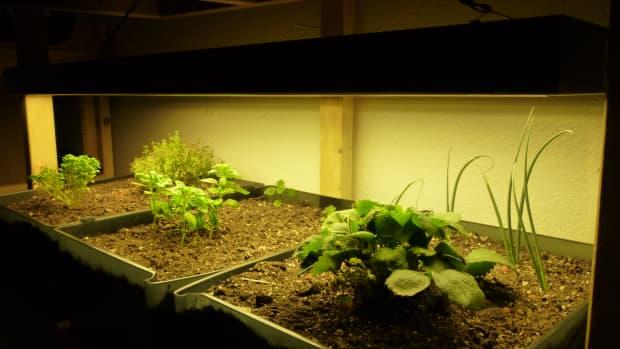 what-is-indoor-gardening