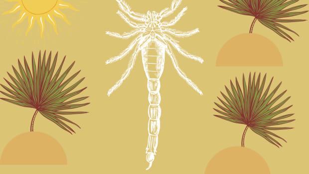 scorpio-rising-explained