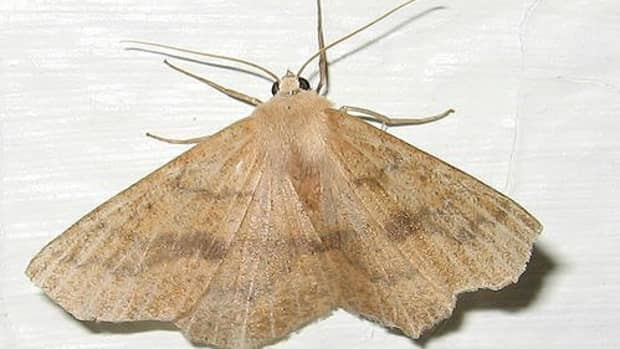 how-to-get-rid-of-moths-in-your-kitchen-cupboards