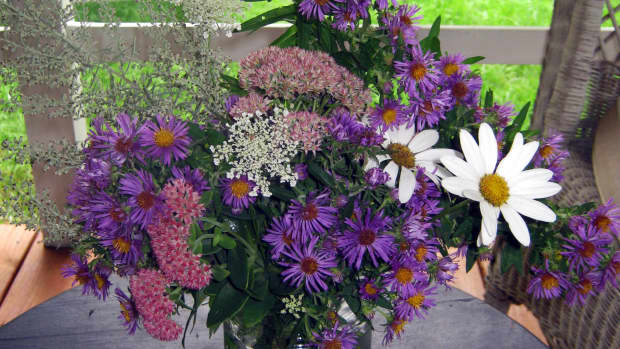 fall-flowers-late-blooming-perennials