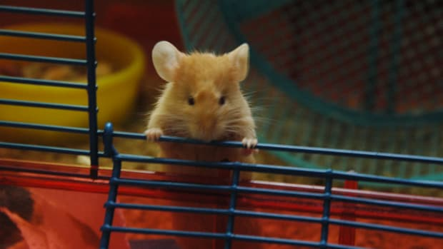 mouseodor