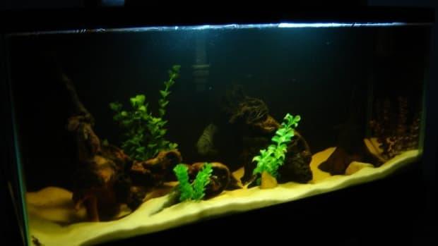 driftwood-in-aquariums