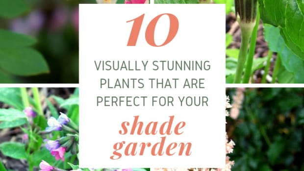 10-best-plants-for-shade