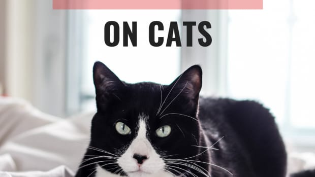 how-to-get-rid-of-hot-spots-on-cats