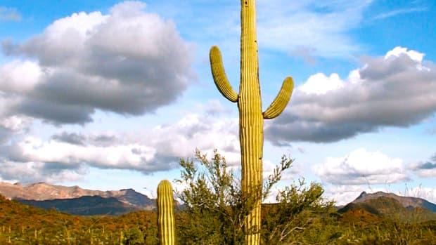 cactus-on-the-desert-landscape
