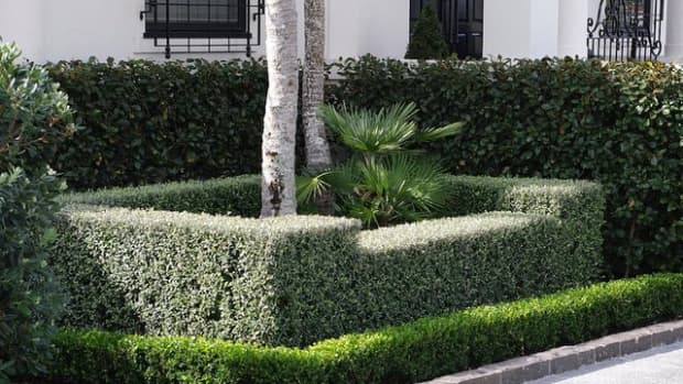 best-hedging-plants