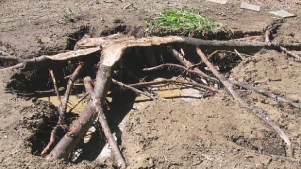 the-most-fun-and-easiest-way-to-remove-tree-stumps