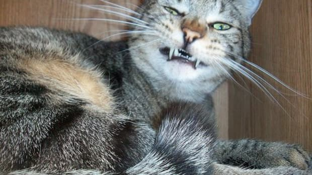 why-is-my-cat-sneezing-causes-remedies-and-when-you-really-need-to-worry