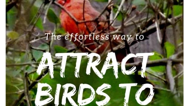 wildlife-in-the-backyard-the-birds