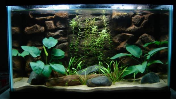 how-to-make-a-fish-tank-background