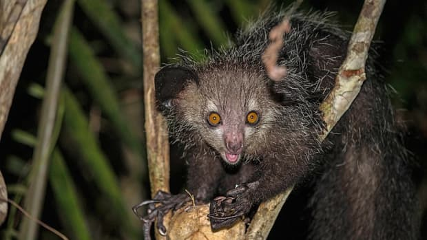 12-of-the-strangest-animals-in-the-world