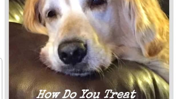 calluses-on-large-dogs-elbows-how-to-treat