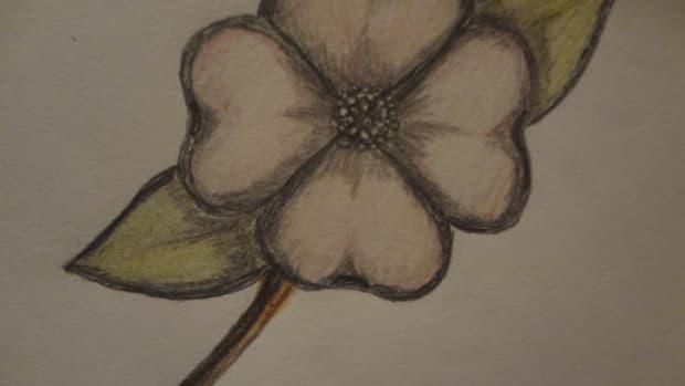 how-to-draw-a-dogwood-flower