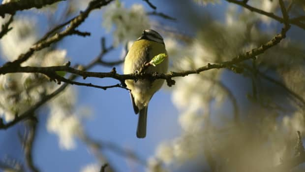 spring-is-sprung-rhymes-and-poetry-related-to-springtime