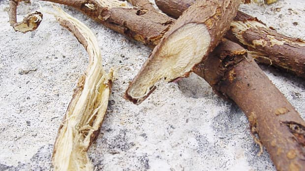 licorice-root-for-tooth-decay-and-gum-disease-benefits-and-dangers