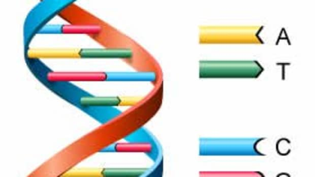 explaining-dna-to-a-six-year-old