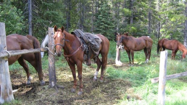 horsetrainingdisciplineabuse