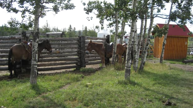 mules-and-other-hybrids-about-equine-crosses